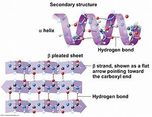 Protein Structure  Secondary  Alpha