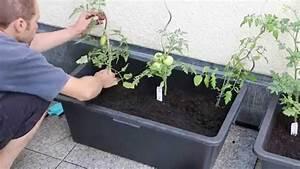 Gartengestaltung Einfach Und Günstig : tomatenk bel einfach und g nstig selbst bauen garten tomaten pflanzen pinterest selbst ~ Markanthonyermac.com Haus und Dekorationen