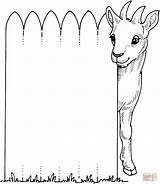 Goat Coloring Pages Fence Cute Billy Goats Through Looks Animal Printable Farm Colouring Sheets Baby Adult Supercoloring Kleurplaten Printables Clip sketch template