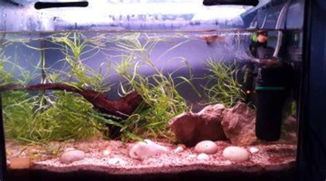 quelle eau pour aquarium quelle crevette aquarium eau douce