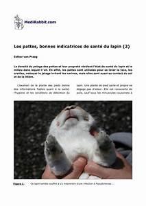 Plante Oreille De Lapin : pdf les pattes bonnes indicatrices de sant du lapin 2 ~ Melissatoandfro.com Idées de Décoration