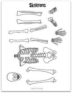 internal organs blank worksheetdoc internal body parts