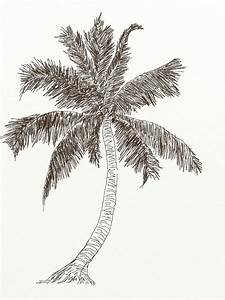 learn how to draw coconut tree with pencil step by step ...