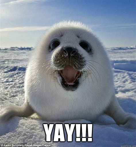 yay happy weasel seal quickmeme