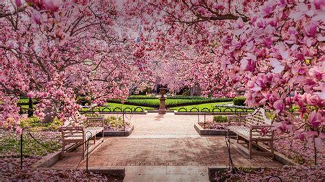 National Spring Bing Wallpaper Download