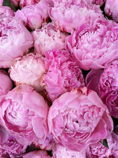 do peonies like sun or shade peony on columbia road flower market london markets pinterest peonies flower and roads