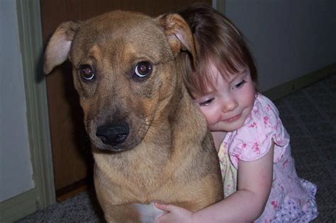 Your Dog Hates Hugs -- Science of Us
