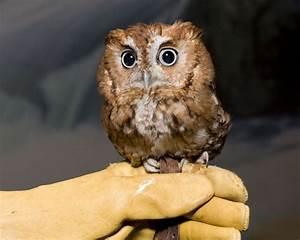 baby owl 1funny