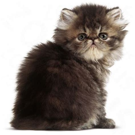 Royal Canin Kitten by Royal Canin Kitten 32 Croquettes Pour Chaton