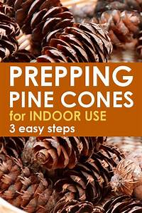 Pinecone, Cleaning, Steps, Before, Indoor, Use