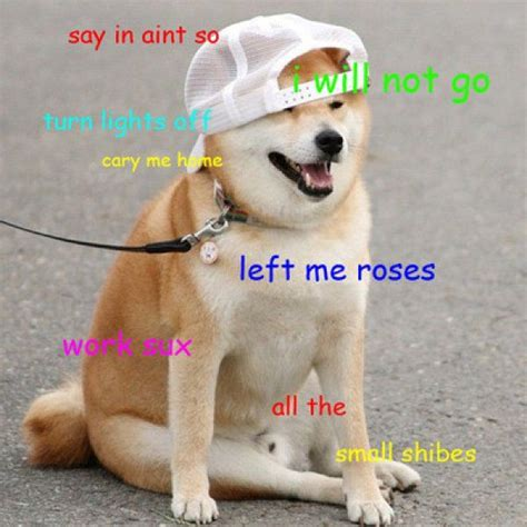 doge meme  wow dog funny shiba inu meme