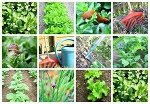 Mischkultur Im Garten : gem sebeet mischkultur welche gem sesorten nebeneinander pflanzen ~ Orissabook.com Haus und Dekorationen