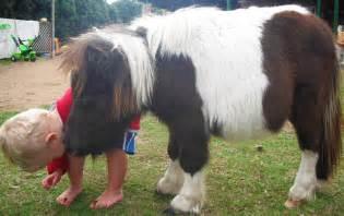 Miniature Dwarf Ponies
