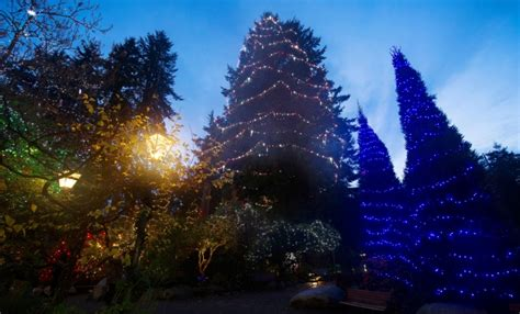 capilano christmas tree among the world s tallest