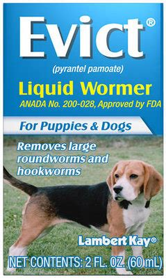 identification  prevention  worms  dogs jeffers blogs