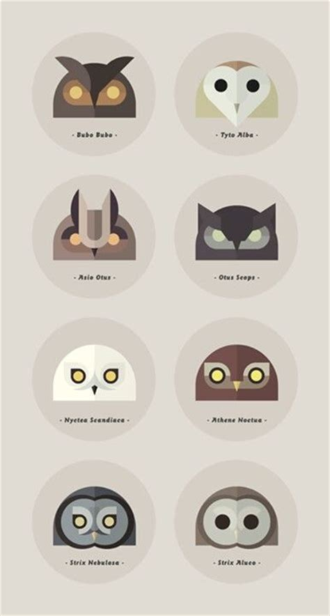 owl types with latin names i like this pinterest owl