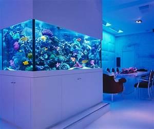 Cool Fish Tanks For Betta Fish In Mind Fish Tank Moon View ...