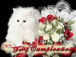 Feliz Cumpleaños a Tí New Multimedia
