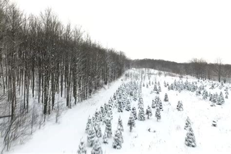 christmas trees in northern mi sights and sounds view of northern michigan trees fro