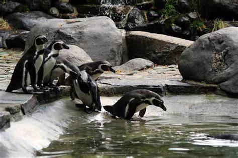 Prague Zoo Prague Stay