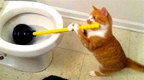 laugh nov  funny cat compilation funny