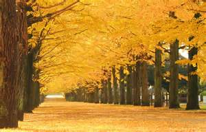 outer tokyo 39 s 5 best fall foliage spots all about japan