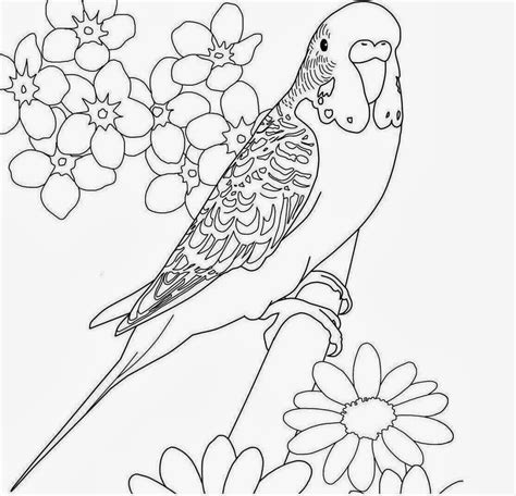 pictures to color colours drawing wallpaper beautiful bird parrot coloring