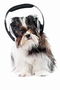 Dog listening to music stock photo. Image of cute ...