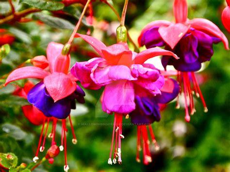 pink or purple flowers pink and purple flowers by wallowinginsorrow on deviantart