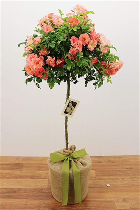 Anniversary Gifts  Seeds Of Life  Gift Tree Nursery