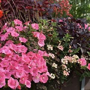 Balkon Gestaltungsideen Pflanzen : ideen f r ihre garten gestaltung in orange ~ Lizthompson.info Haus und Dekorationen