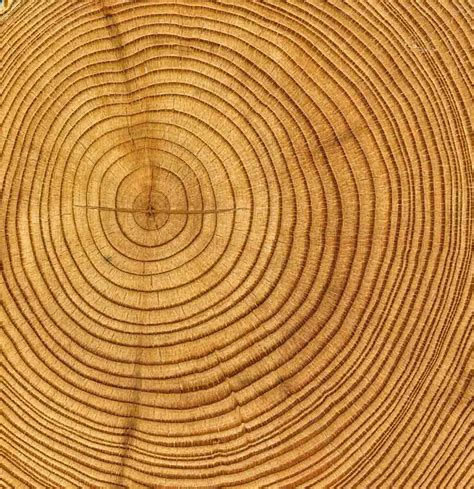 Pin Tree Rings on Pinterest