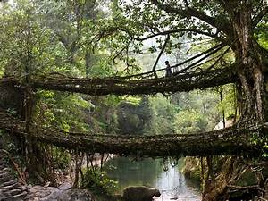 The living latticework bridges in the Khasi Hills of India ...