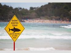 Top 10 Shark Infested Beaches in the World BootsnAll