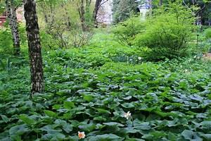 Undergrowth Green Lush Trees Gardens