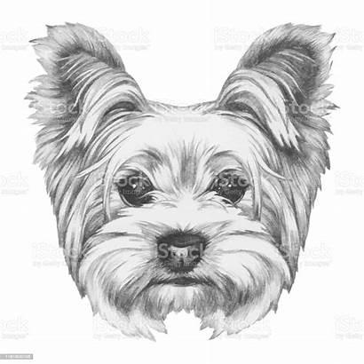 Terrier Yorkshire Dog Portrait Drawn Hond Portret