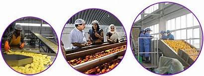 India Processing Agro Ic Icfa International Cargill