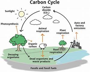 The Carbon Cycle - Knowledge Bank