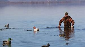 Diver Strategies For Decoy