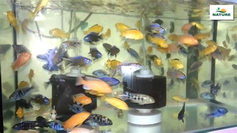cuisiner l amarante eau de mer pour aquarium 28 images tunnel sous l eau
