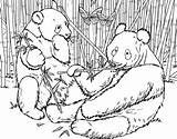 Urs Colorat Planse Kolorowanki Desene Pandas Malvorlagen Ausdrucken Kristiestreicherbeautybar Bamboos Biag Osos Votos Coloringhome sketch template