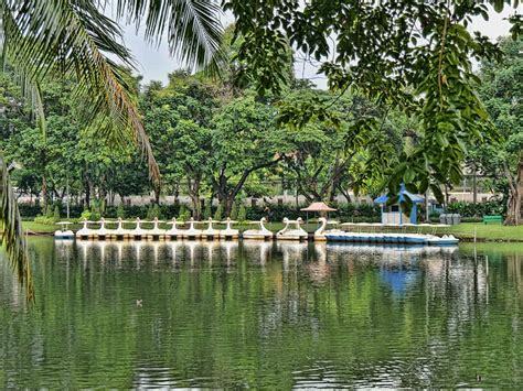 Swan Boats Lumpini Park by Lumpini Park Swan Boats Luxury Columnist