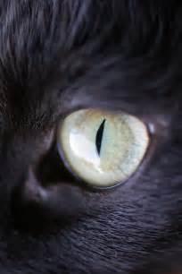 cat s eye tom clark cat s eye
