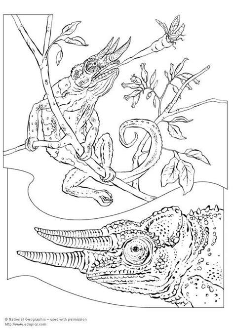 dibujo  colorear camaleon img