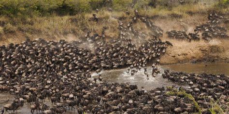 serengeti wildebeest migration trailblazers travel