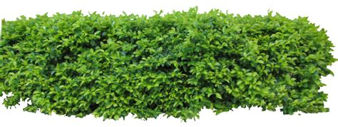 Hedge1 Png By Owhl-stock On Deviantart