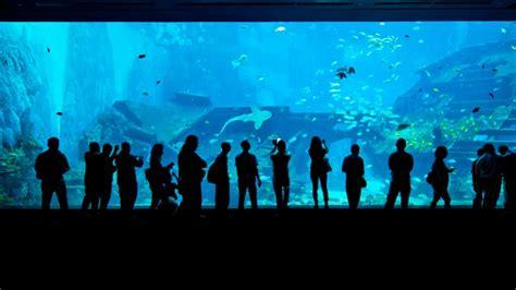 s e a aquarium visitsingapore