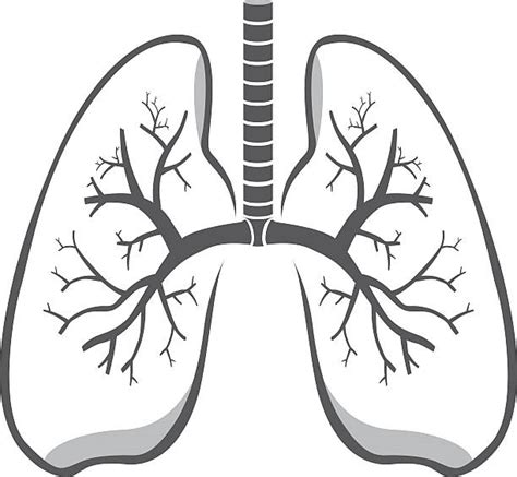 Lungs Clipart Royalty Free Lungs Clip Vector Images Illustrations