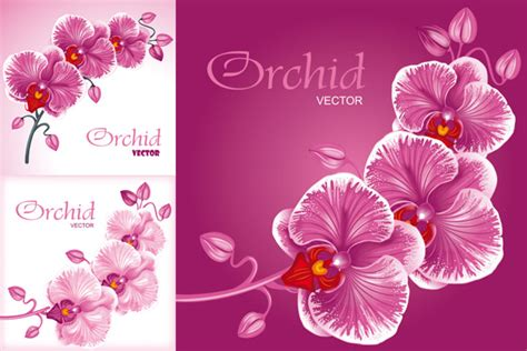 flower orchid vector graphics   millions