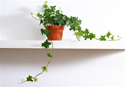 plantes pour chambre plante pour chambre liste ooreka